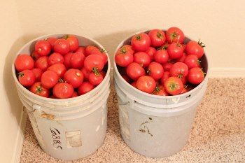 These lovely tomatoes were from a local farm last January. I am hoping to visit make a visit for tomatoes again soon.