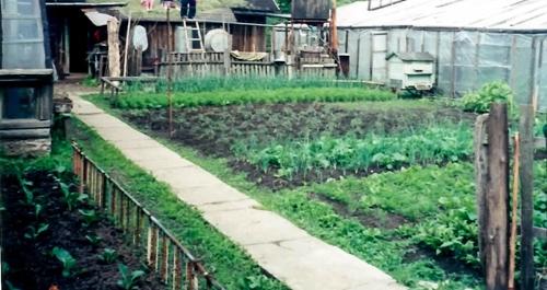 My grandparents' garden in Belarus.
